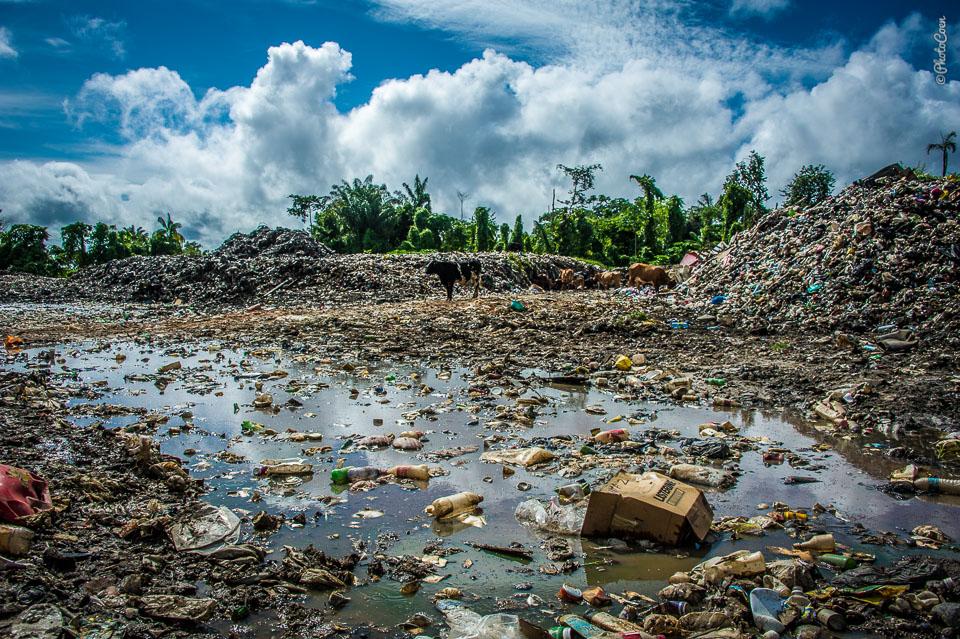 cbw_20120721_Guyana_N1509.jpg